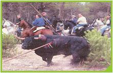 Tradición, el toro de la vega, y el deseo de aparentar.